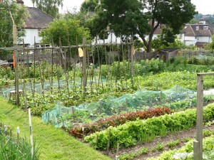 Allotment Nethercourt 2